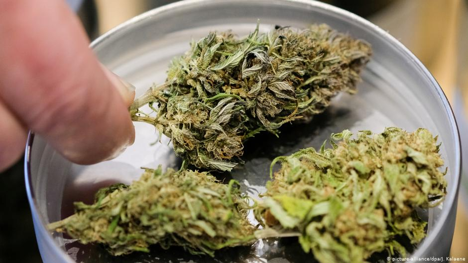Palm Harbor Florida Medical Weed Dispensary Near Me