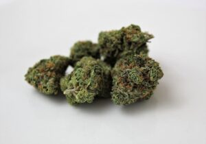 Spring Hill Florida Medical Weed Dispensary Store Near Me